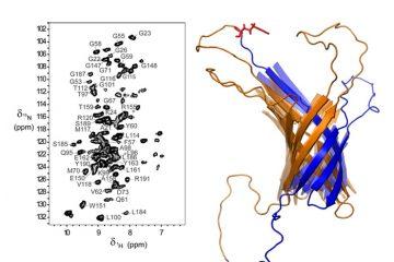 Structure & Dynamique des protéines membranaires